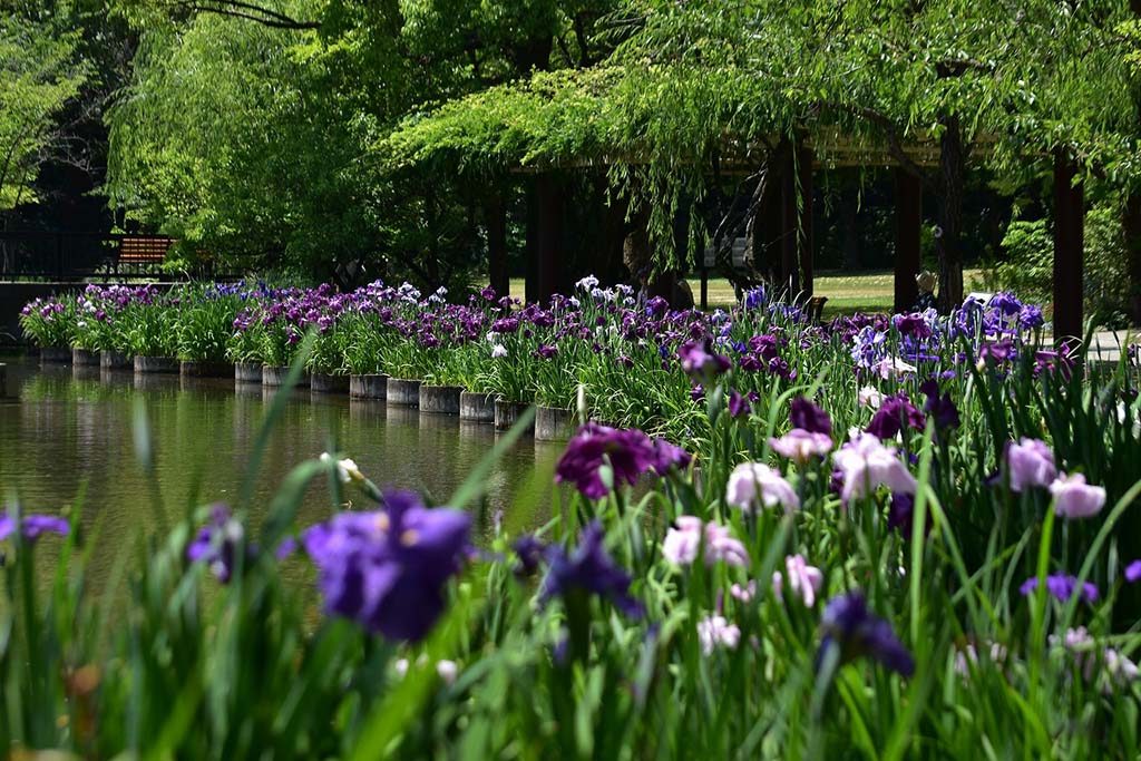 園内は四季を通じて様々な花を楽しめる。花しょうぶは5月下旬〜6月中旬