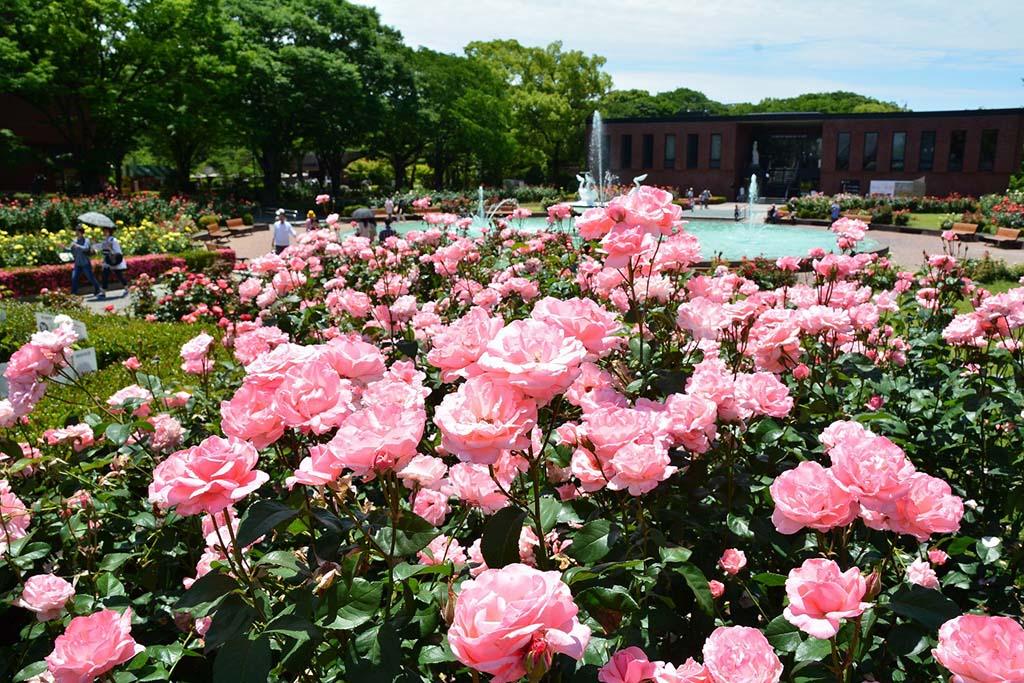 園内は四季を通じて様々な花を楽しめる。バラは5月〜8月と10月中旬〜12月の2回花を咲かせる