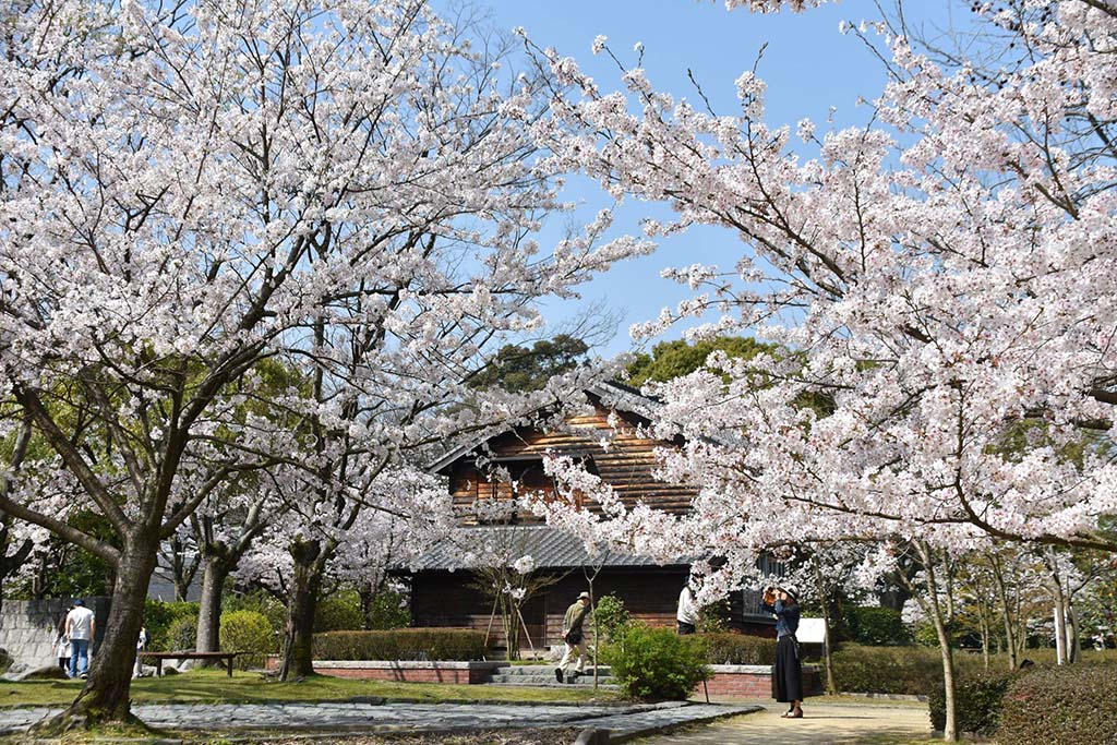 園内は四季を通じて様々な花を楽しめる。桜は3月下旬〜4月上旬
